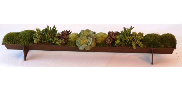 succulent trough